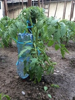 bottle irrigation