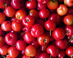 west indian acerola cherries