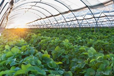 Netherland Farming