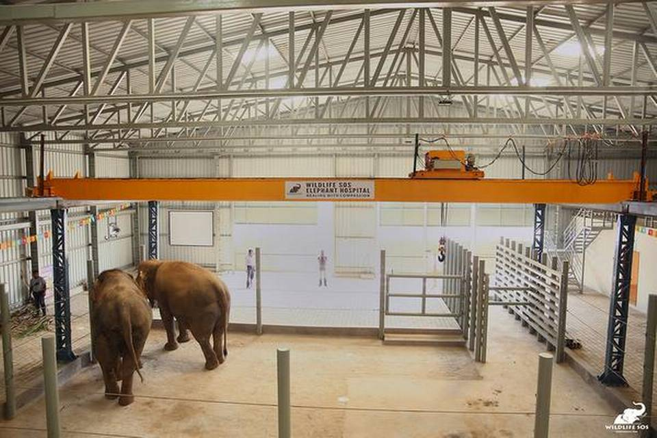 Elephant hospital