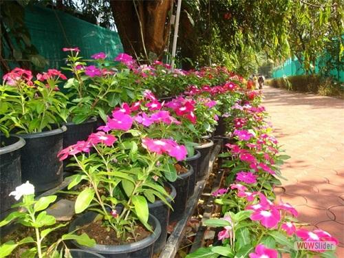 Trissur coorporation flower show